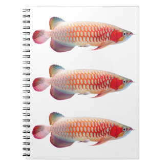 """The spring note """"of Super Red Arowana"""" Spiral Notebook"""