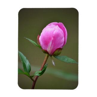 The Spring Tulip Magnet