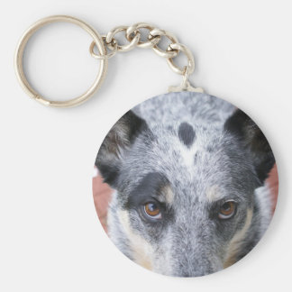The Stare Down - a cowdog look Key Ring