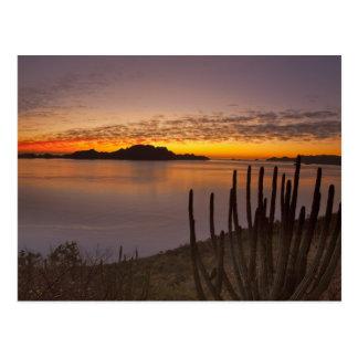 The sunrise over Isla Danzante in the Gulf of 2 Postcard