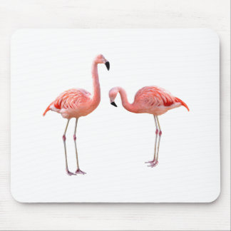 "The superior product ""of flamingo"""