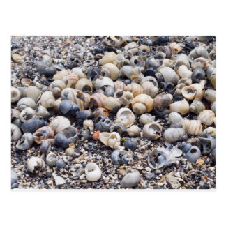 The surface of the sea coast with blur background postcard
