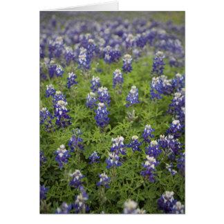 The Texas Bluebonnet Note Card