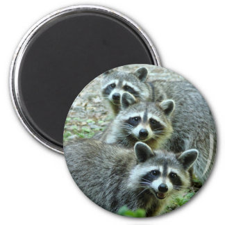 The Three Raccoons Magnet