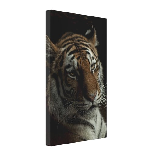 The Tiger Gallery Wrap Canvas