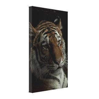 The Tiger Canvas Prints
