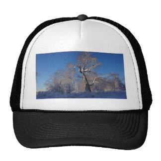The Tree Cap
