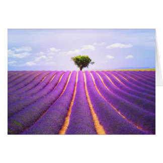 The tree in the lavender card