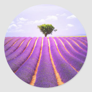 The tree in the lavender classic round sticker