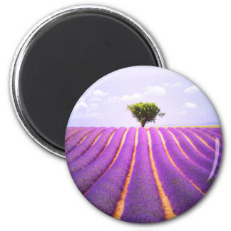 The tree in the lavender magnet