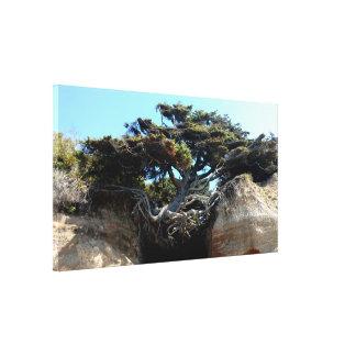 The Tree of Life WA Coast Stretched Canvas Print