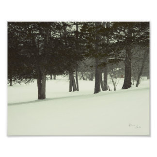 The Tree Photo Print