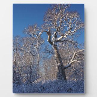 The Tree Plaque