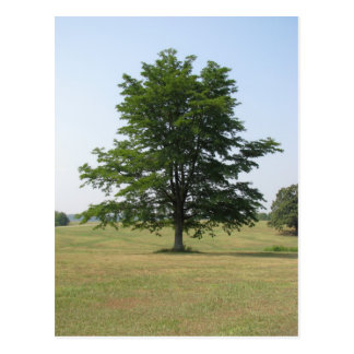 The tree stands alone postcard