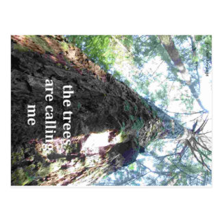 the trees are calling me, forest camping postcard
