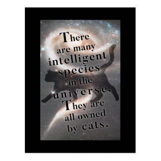 'The universe and cats' funny quote postcard
