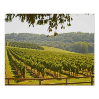 The vineyard and a valley with a forest - poster