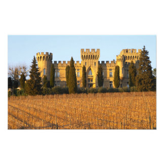 The vineyard with syrah vines and the chateau art photo