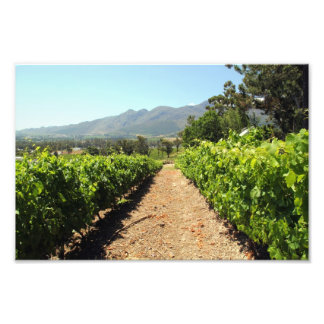 The Vineyards in Franschhoek South Africa Photo