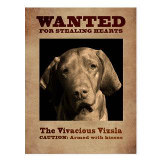 The Vivacious Vizsla Postcard