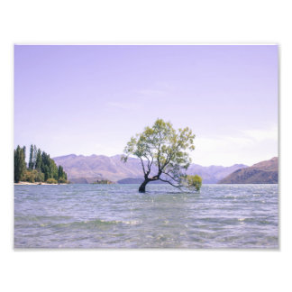 The Wanaka Tree Photo Print