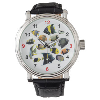 The watch of Marine Angelfish, No.02