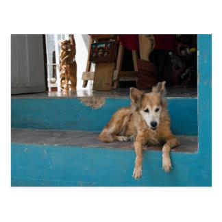 The Watchdog. Postcard