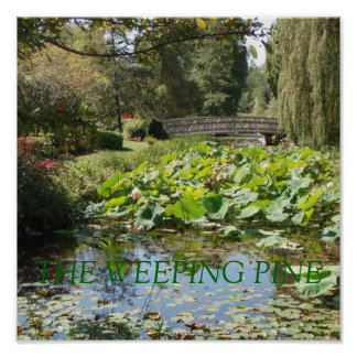 THE WEEPING PINE POSTER