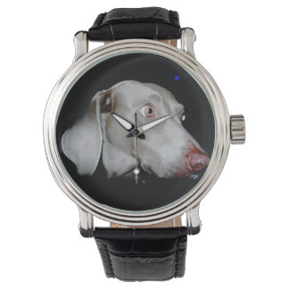 The Weimaraner Watch