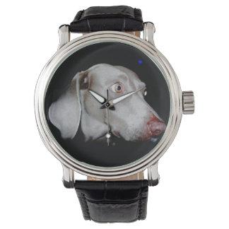 The Weimaraner Watch