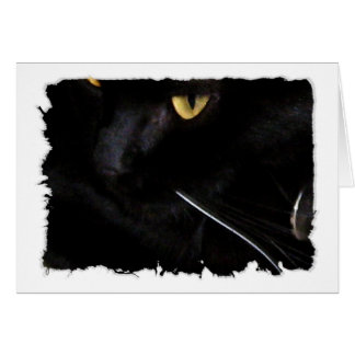 The Whisker Greeting Card