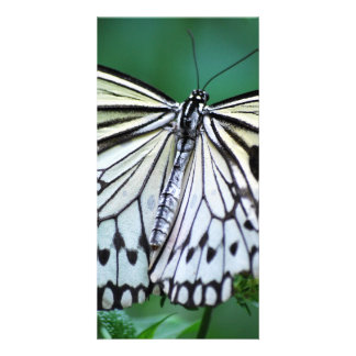 The White Butterfly Personalized Photo Card