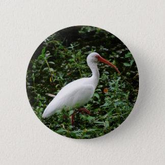 The White Ibis... 6 Cm Round Badge
