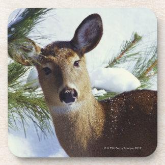 The White-tailed deer (Odocoileus virginianus), Beverage Coasters