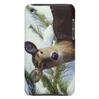 The White-tailed deer (Odocoileus virginianus), iPod Touch Case