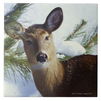 The White-tailed deer (Odocoileus virginianus), Tile
