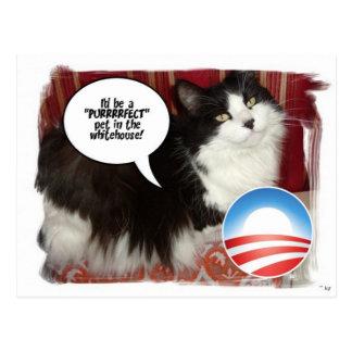 The Whitehouse Pet Kitty Cat Postcard