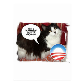 The Whitehouse Pet Kitty Cat Postcard