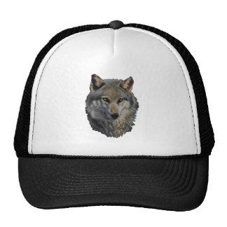 THE WILD STARE CAP