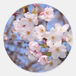 The work of the cherry tree bloom which is Kobe Round Sticker