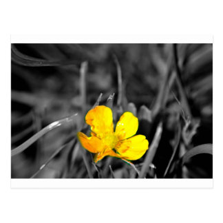 The Yellow Flower - postcard