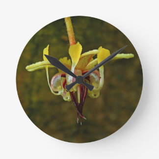 Theobroma Cacao Tree Flower Round Clock