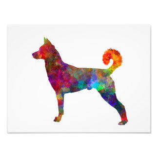they canaan dog in watercolor 2 photo print