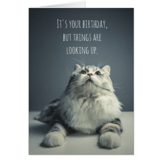 Things Are Looking Up Cat Birthday Card