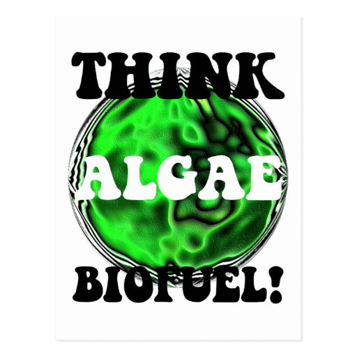 Think algae biofuel! postcards