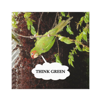 Think Green Red Masked Parakeet Stretched Canvas Print