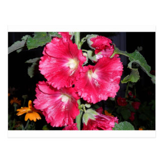 THINK PINK Hollyhock cards apron gifts gift garden Postcard