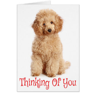 Thinking of You Apricot Poodle Puppy Dog Card