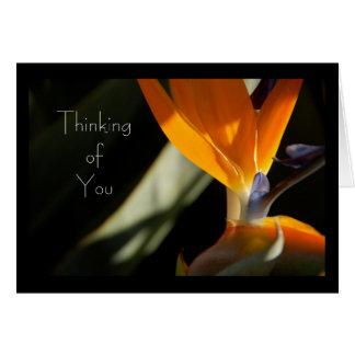 THINKING OF YOU Bird-of-Paradise Card