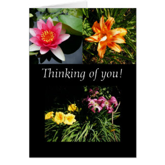 Thinking of you! Blank Greeting Card